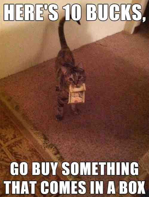 cat-wants-a-box-heres-ten-bucks