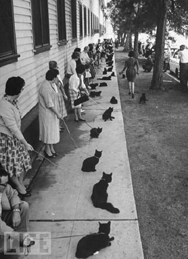 cats on a leash natasha 39 s memory garden. Black Bedroom Furniture Sets. Home Design Ideas
